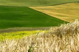 sviluppo-agricoltura