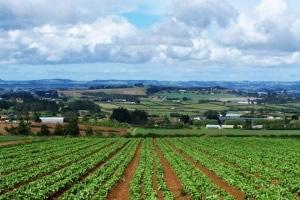 sviluppo-rurale